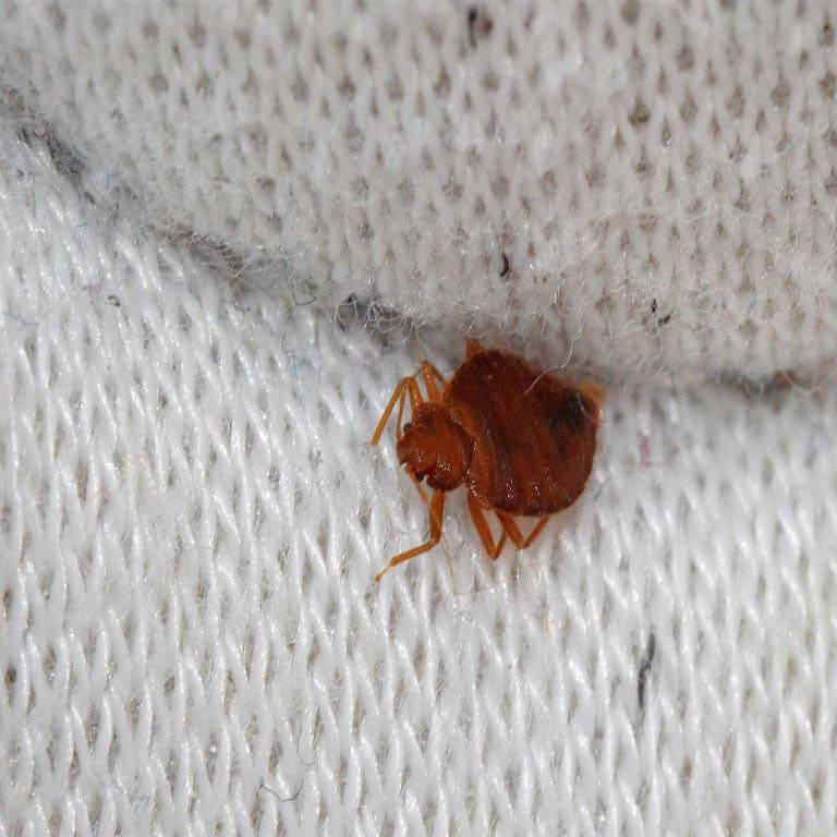 Control de plagas madrid precios fumigacion de cucarachas for Precios limpieza alfombras madrid